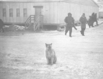 Husky and no 5 Mess Hall
